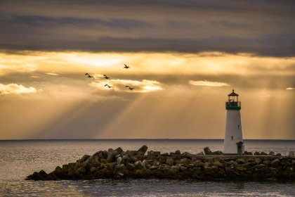 Pelicans in Flight Over Santa Cruz Lighthouse