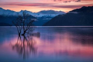 Lone Willow Sunrise