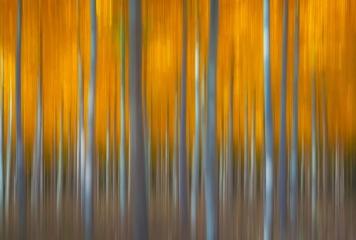 Golden Forest Lines
