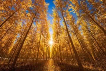 Gates of Autumn