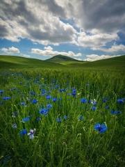 Spring Forever