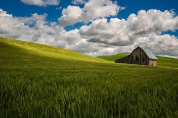 Lone Barn of Palouse #1
