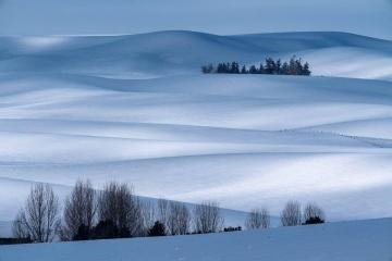 Winter Hills of Palouse
