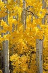 Golden Grove