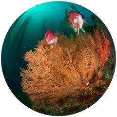 Underwater Welcome