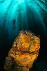 Mono Lobo Reef