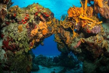 Underwater Arch in Cozumel