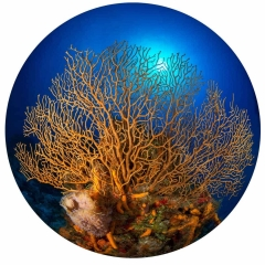 Underwater Orb