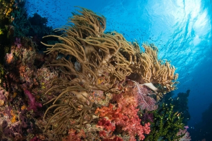 Underwater image in Fiji of soft corals at dive site Kansas.
