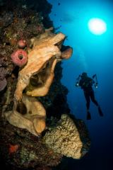 Indonesia's Bunaken Marine Park is filled with marine life including this wall dive with large sponges. The warm colors of the reef contrast with the tropical blue water. I used a wide angle fisheye lens to capture the reef, diver, and the sun shining down.