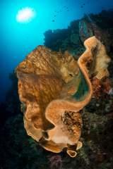 Underwater Reef in Indonesia