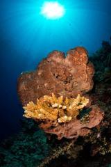 Bunaken Marine Park Reef