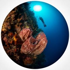 Drifting Above Bunaken Reef