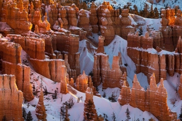 Morning Glow of Bryce Canyon