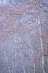 Forest Fog of Skagit