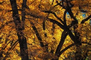 Fall Colors of Yosemite