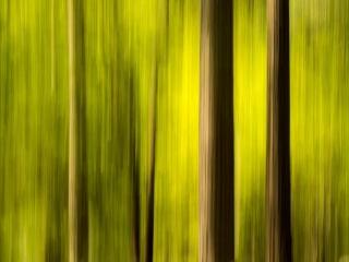 Yosemite Forest Impression #1