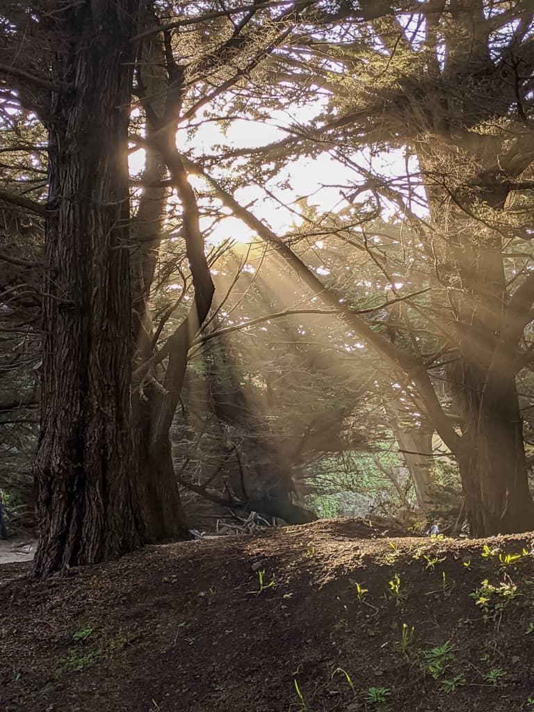 California Coast photo workshop light beams through forest