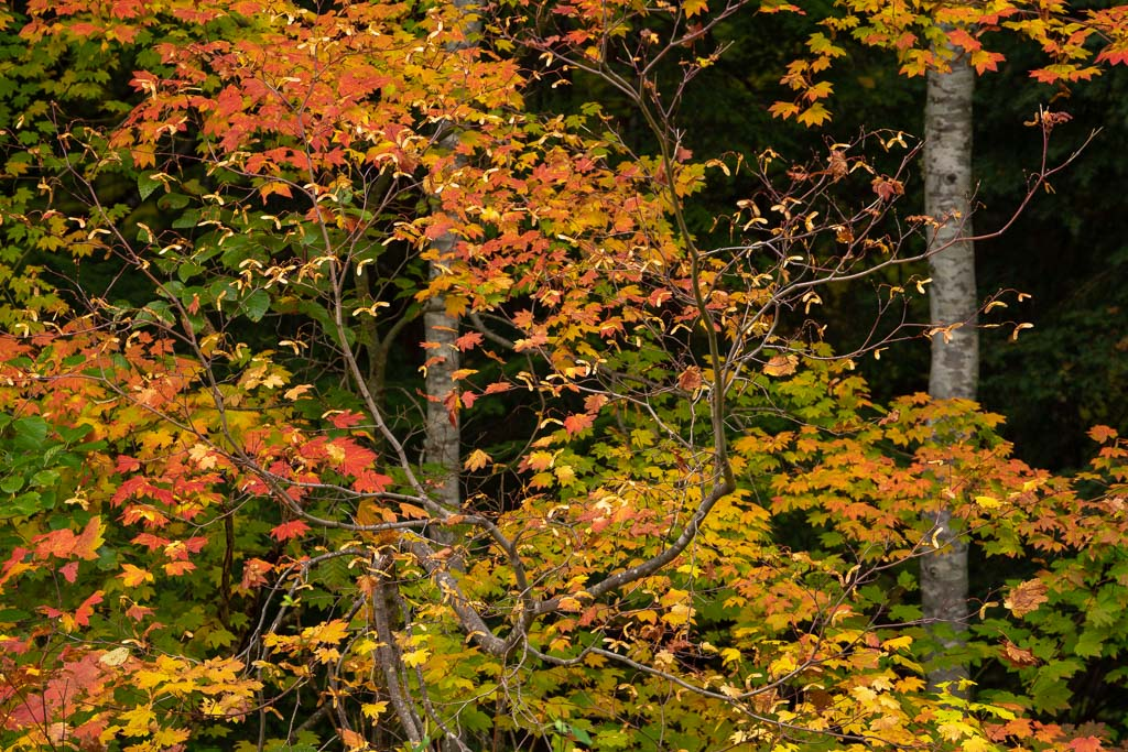 Fall foliage in Mount Rainier National Park is a joy to photograph