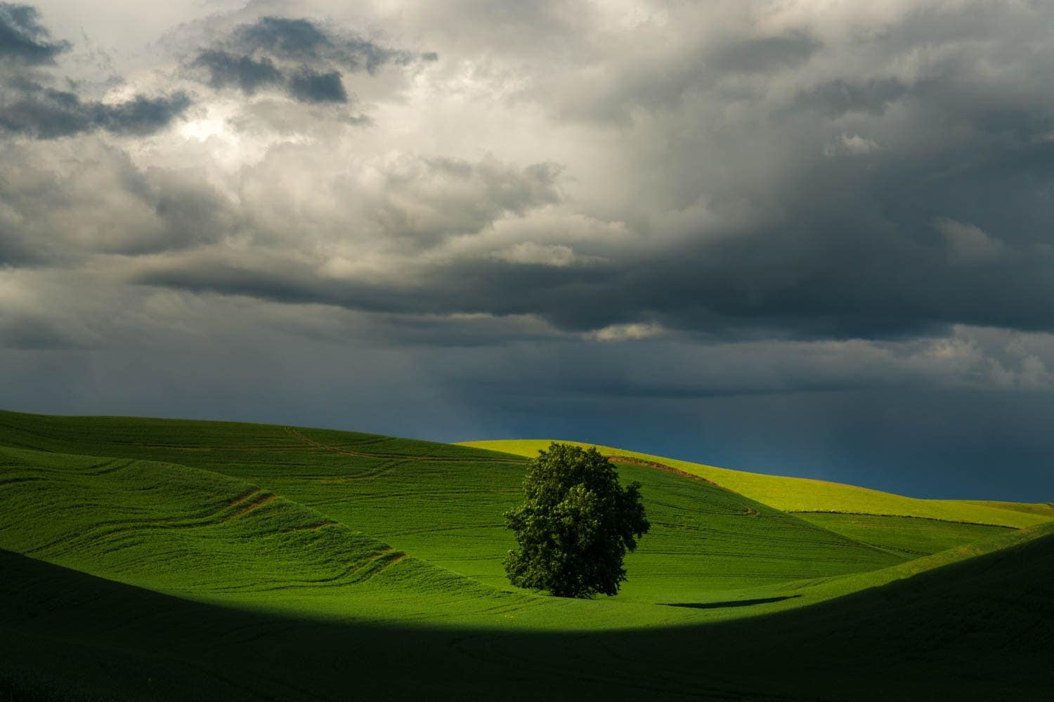 lone tree with storm light during Palouse Photo Workshop