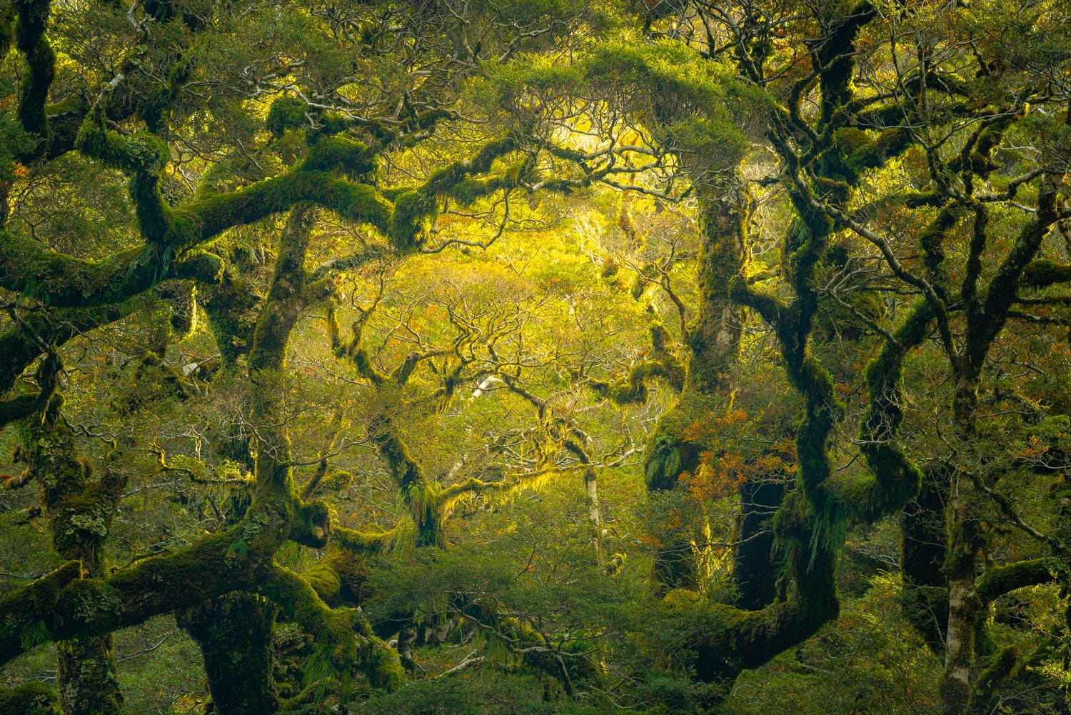 Green temperate rainforest branches and warm light