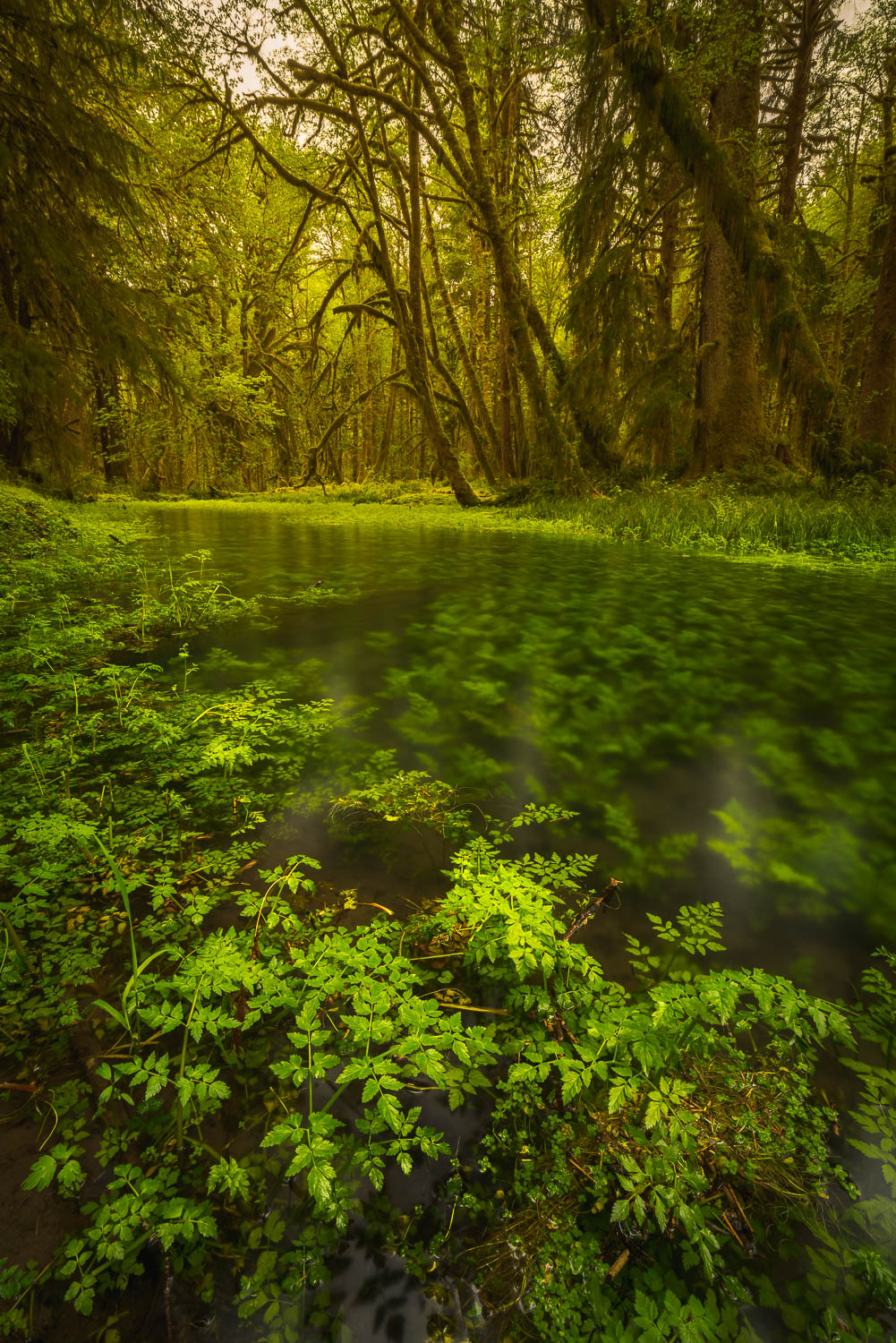Green foliage and moss covered trees with water pool