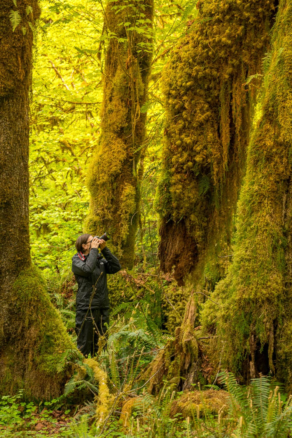 Olympic National Park in Washington is a great spot for a photography workshop