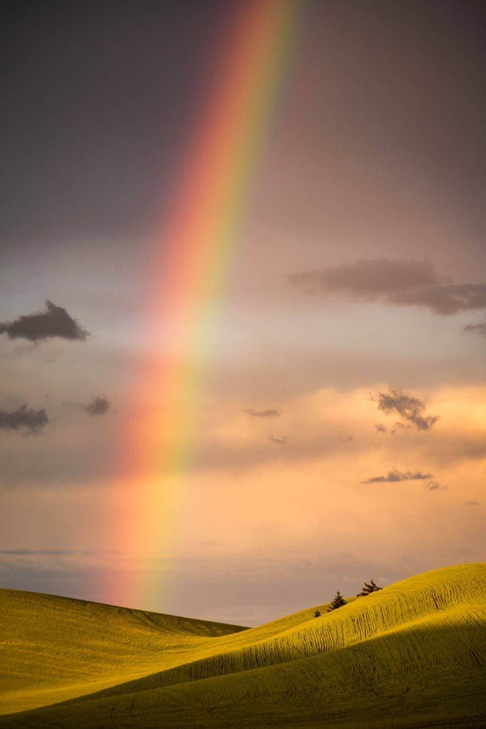 A rainbow forms over golden hills in Palouse