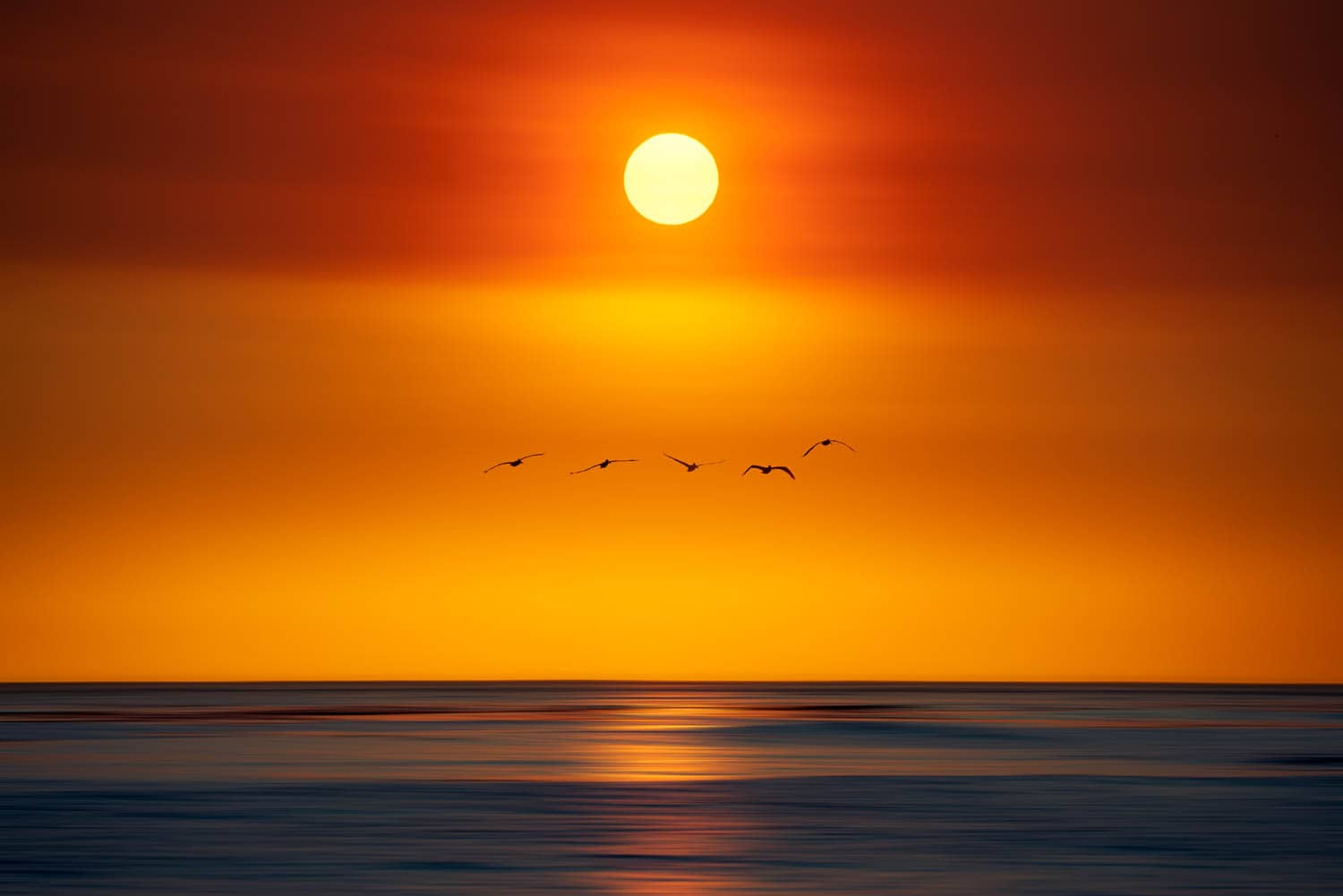 Pelicans fly over ocean with red sky and sun
