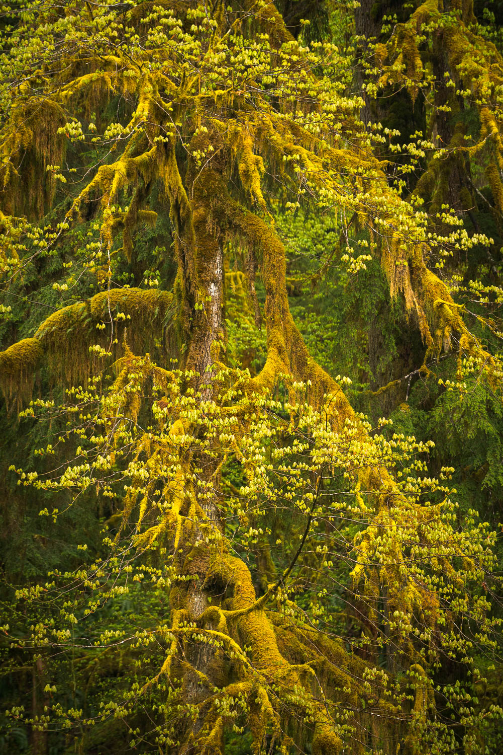 Olympic National Park photo workshop locations include lush rain forests