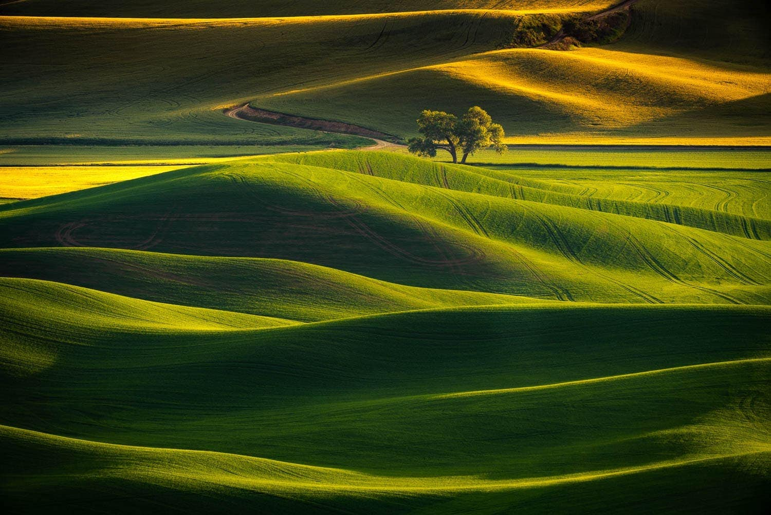 Rolling green fields with lone tree and golden light
