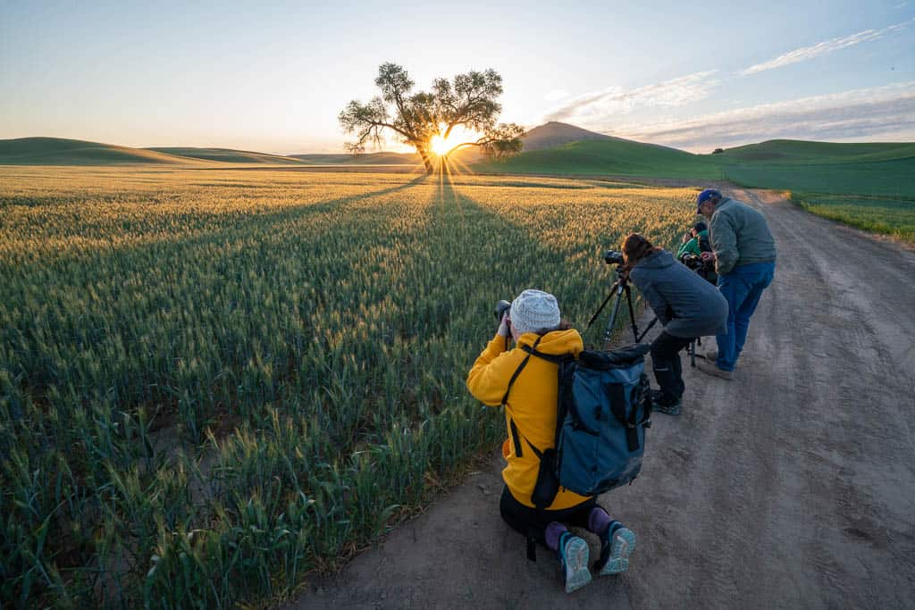 photographer line up along wheat field with sun rising through cottonwood tree